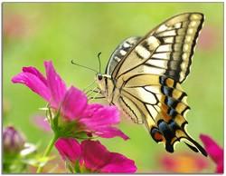 притча бабочка
