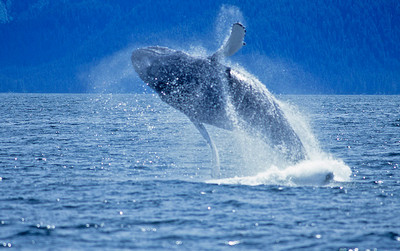 поющие киты