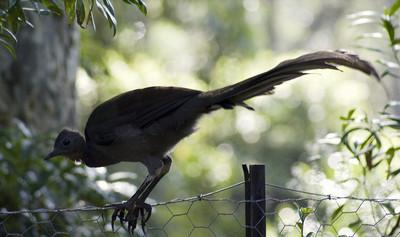поющие птицы