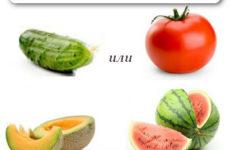 Что вы больше любите — огурец или помидор, дыню или арбуз?