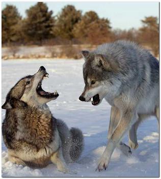 притча два волка