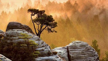 Бодипозитивное дерево