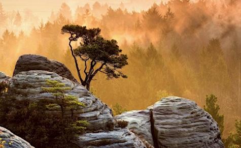 притча про дерево