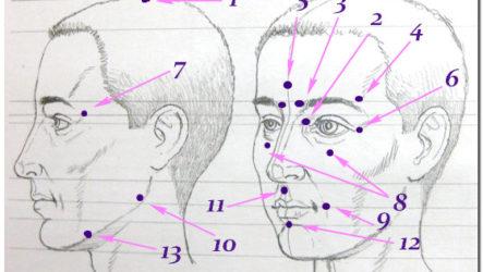Биологически активные точки на голове