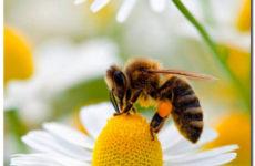 Пчела и муха. Притча старца Паисия Святогорца